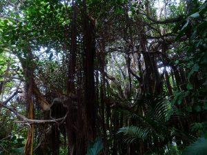 Tier? Pflanze? Oder etwas völlig anderes? Das Dickicht von Vilm ist das wahrscheinlich größte Wesen des Universums.